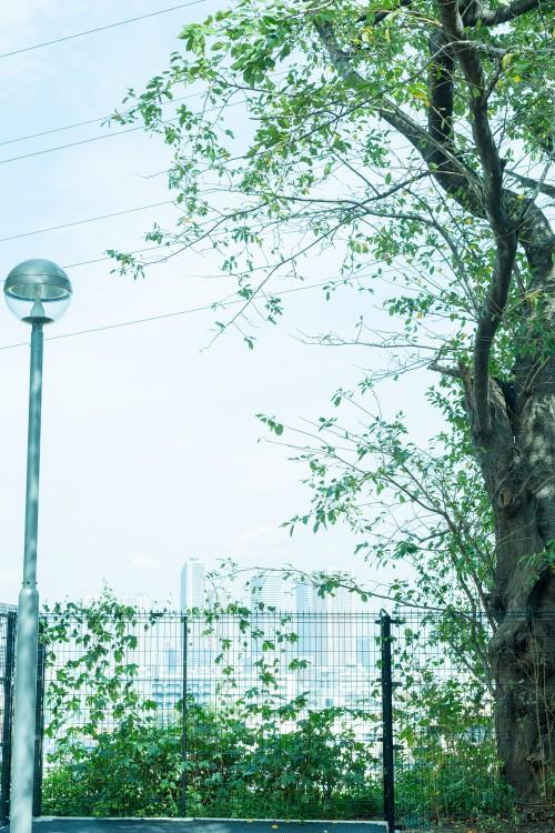 YurikoOmuraPhoto05